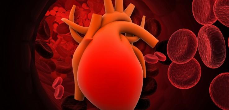 malattie cardiovascolari, sistema circolatorio, circolazione sanguigna, cordiart