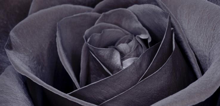Black baccara, rosa nera, antiossidante, antiage