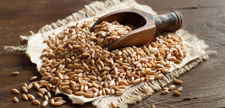 fibre, fibre alimentari, dieta sana, salute, salute intestinale, EFSA