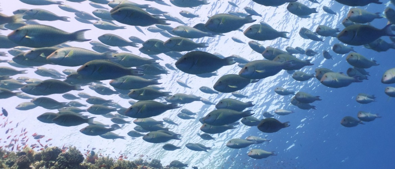 un deposito enorme di microplastiche soffoca l'habitat marino